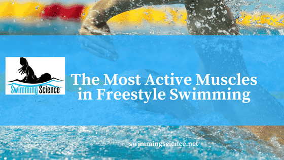 The Most Active Muscles in Freestyle Swimming